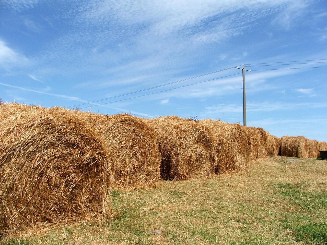 Fakty o rolnictwie o których nawet nie pomyślałeś