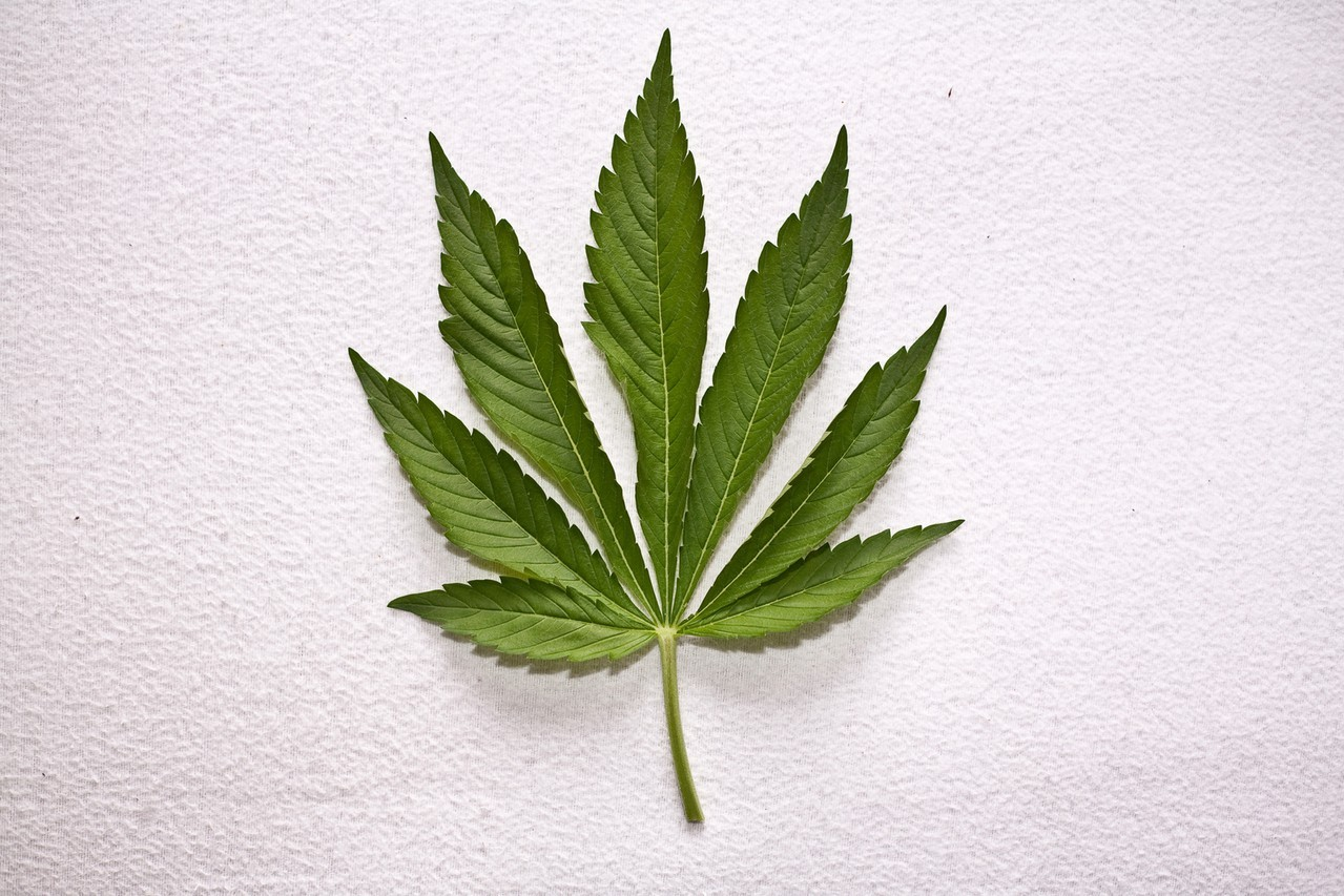 Warto wybrać nasiona marihuany feminizowane