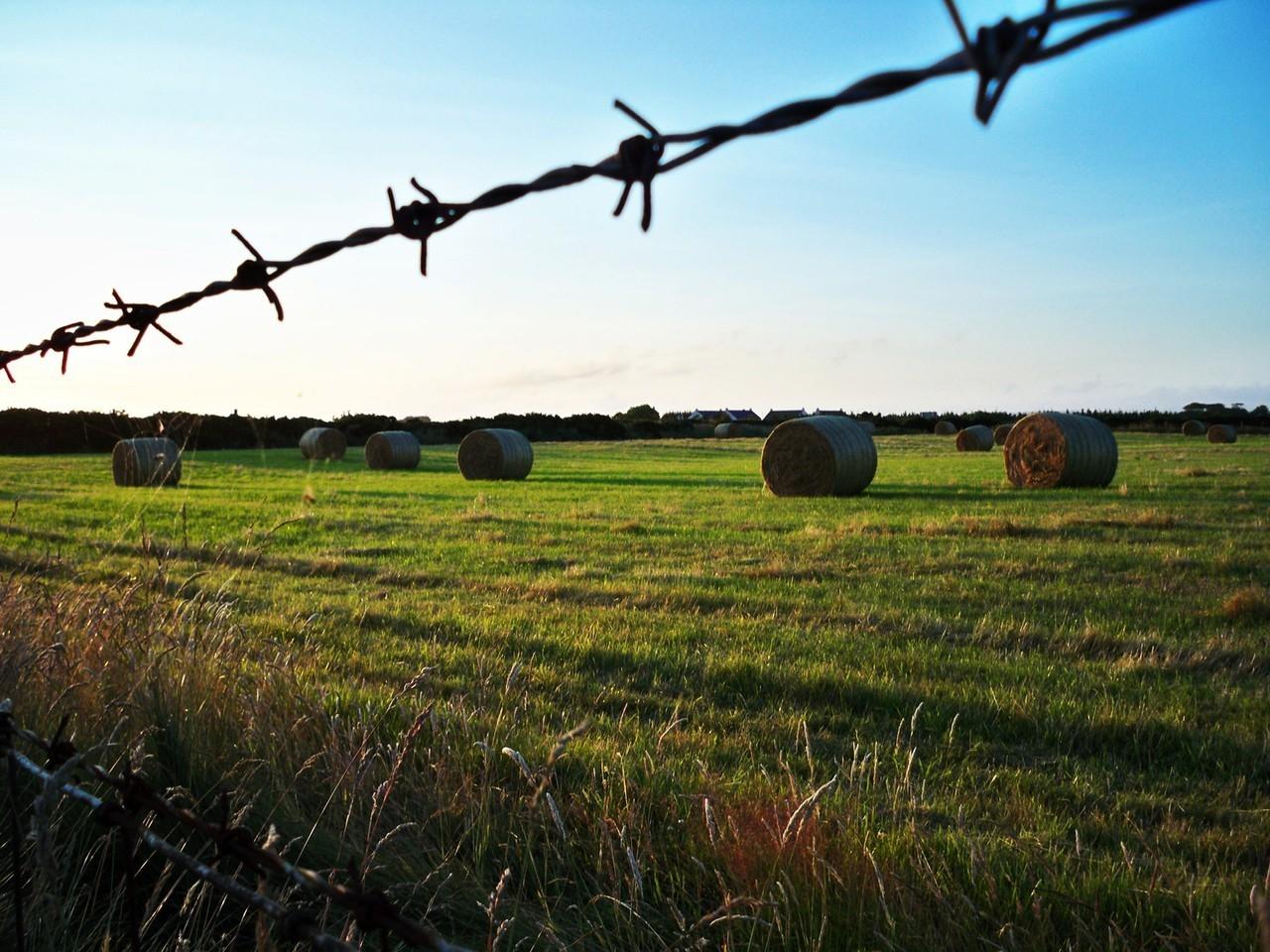 Międzywojenny wzrost znaczenia rolnictwa