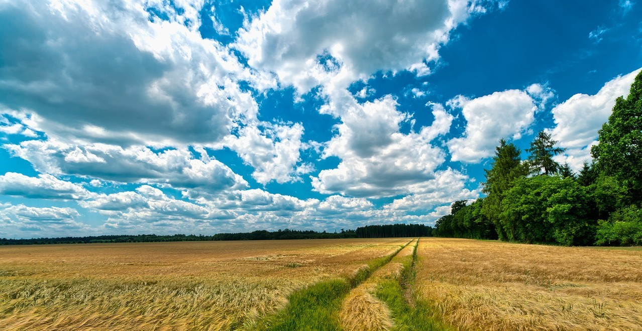 Rolnictwo- prężna gałąź gospodarki